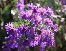 Aktion 2013: Blumige Pflanzen-Einladung
