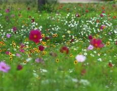 Garten Entenmann in Esslingen