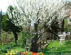 Gartenfreunde Seracher Heide e.V. in Esslingen-Serach