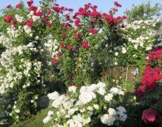 Garten Spindler in Schlierbach