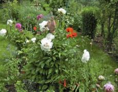Garten Köstle in Esslingen