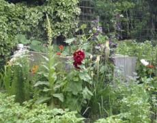 Garten Paech in Kirchheim