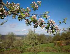 Garten Agendagruppe Streuobstwiesen in Esslingen-Sulzgries