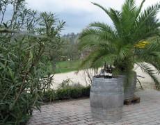 Garten Weingut Bayer in Esslingen