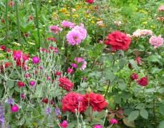Garten Denneler in Esslingen-Krummenacker