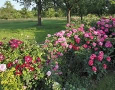 Garten Jurisch in Wendlingen-Unterboihingen
